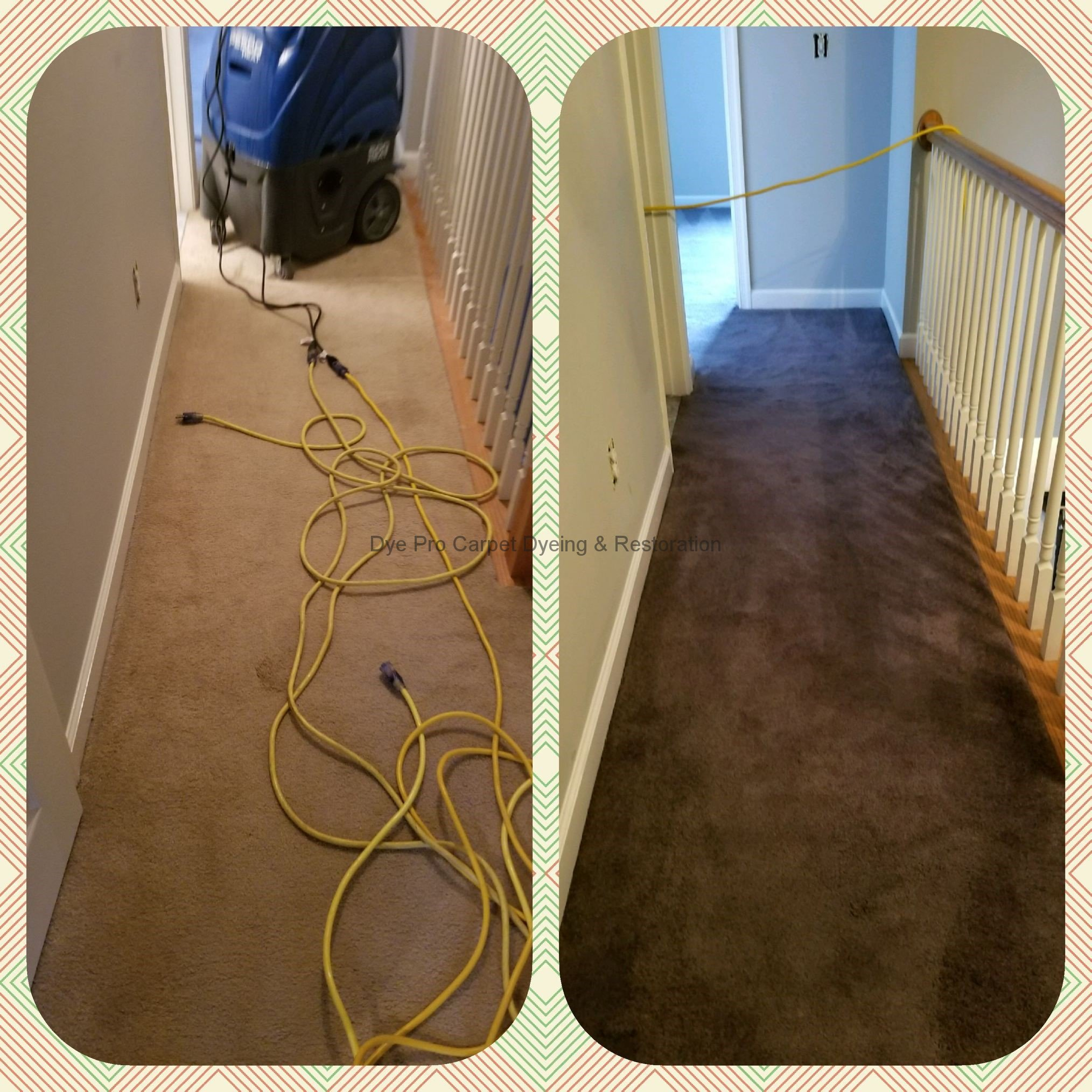 Whole Room Carpet Dyeing in Arlington, VA