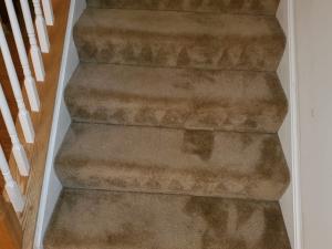 Bleach Spot Repair of Rental Property in Manassas, VA