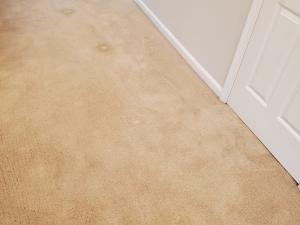Bleach Spot Repair in Ashburn, VA Rental Property