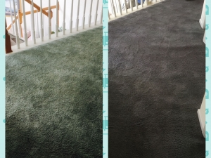 Whole Room Carpet Dyeing in Washington D.C.