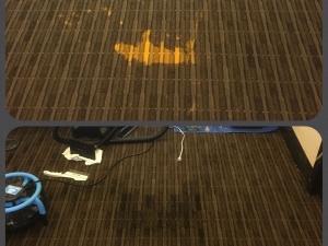 Bleach Spot Repair in Washington D.C. Office