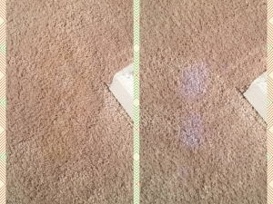 Stain Repair on Poly Carpet in Baltimore, MD