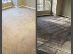Whole Room Carpet Dyeing - Arlington, VA