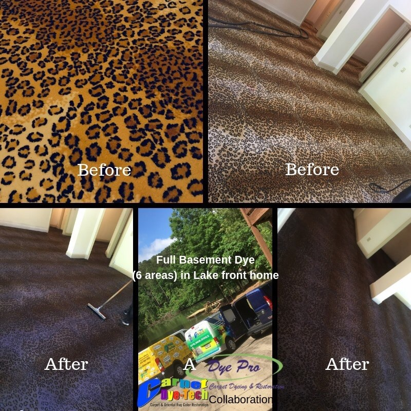 Color Restoration Whole Room Carpet Dyeing Dye Pro Carpet Dyeing Restoration Stafford Va Certified Dye Specialists Bleach Spot Repairs Sun Damage Repair Over Dyes Full Whole Room Color Changes