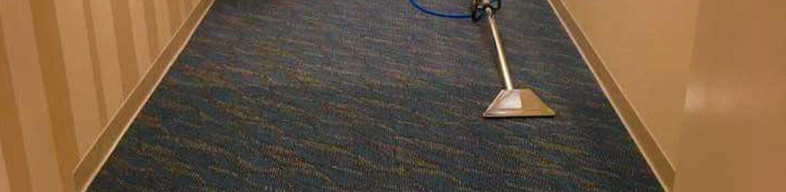 Pet Stain Remover Amp Odor Eliminator Dye Pro Carpet